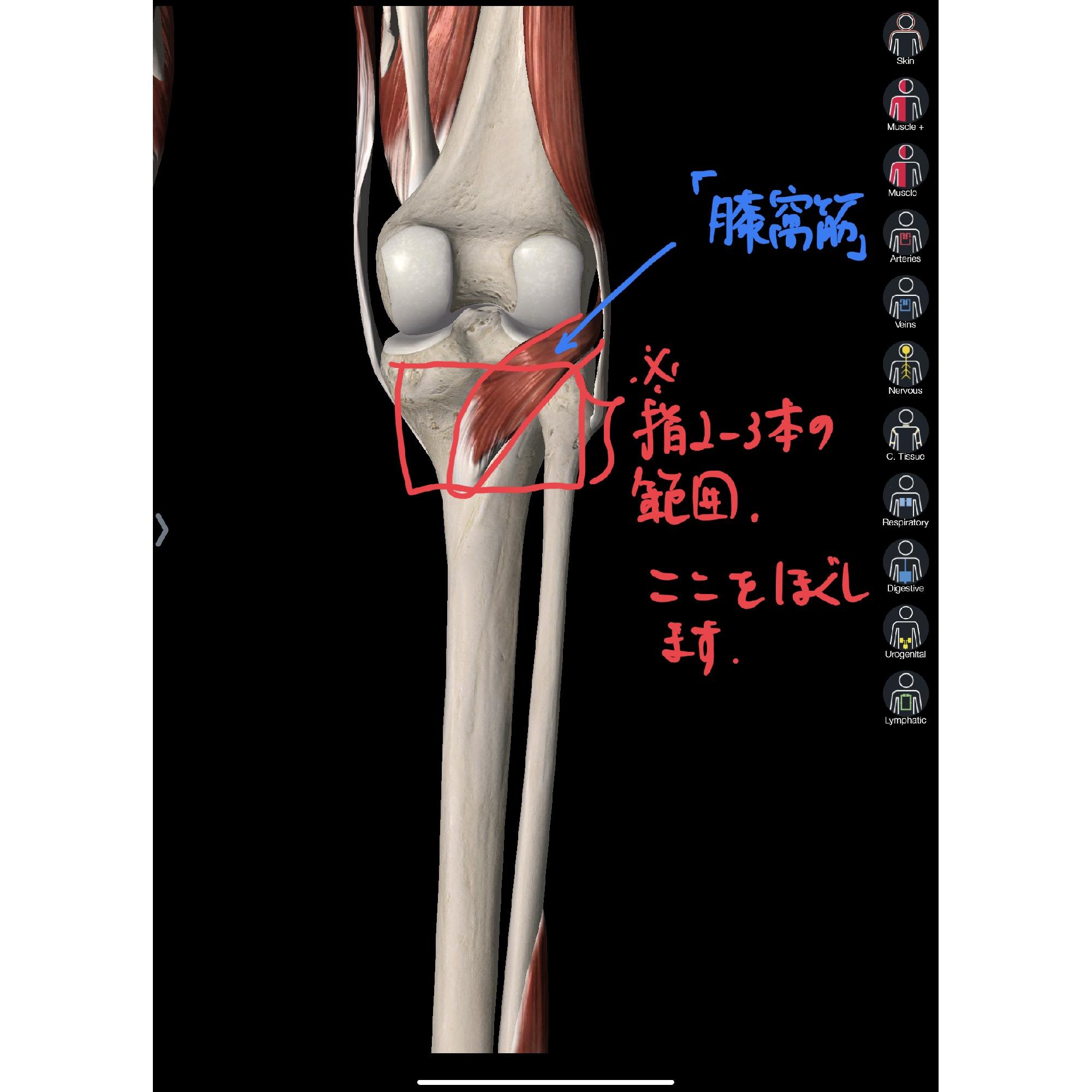 痛み 膝 スポーツ 裏 【医師監修】スポーツによる膝の痛みについて解説!運動前や普段からできる予防策 私の救急箱
