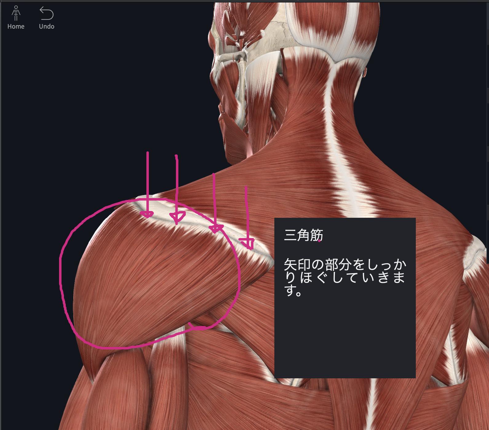 筋 痛 三角 筋肉 四十肩(五十肩)で三角筋が痛い?