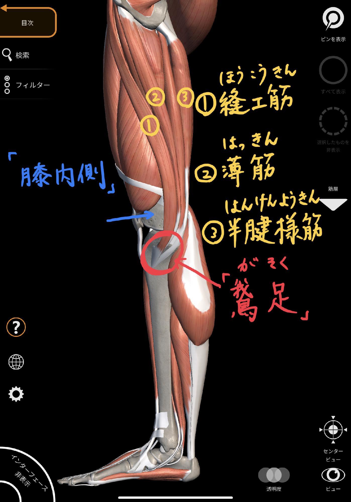 の 痛み の 膝 内側