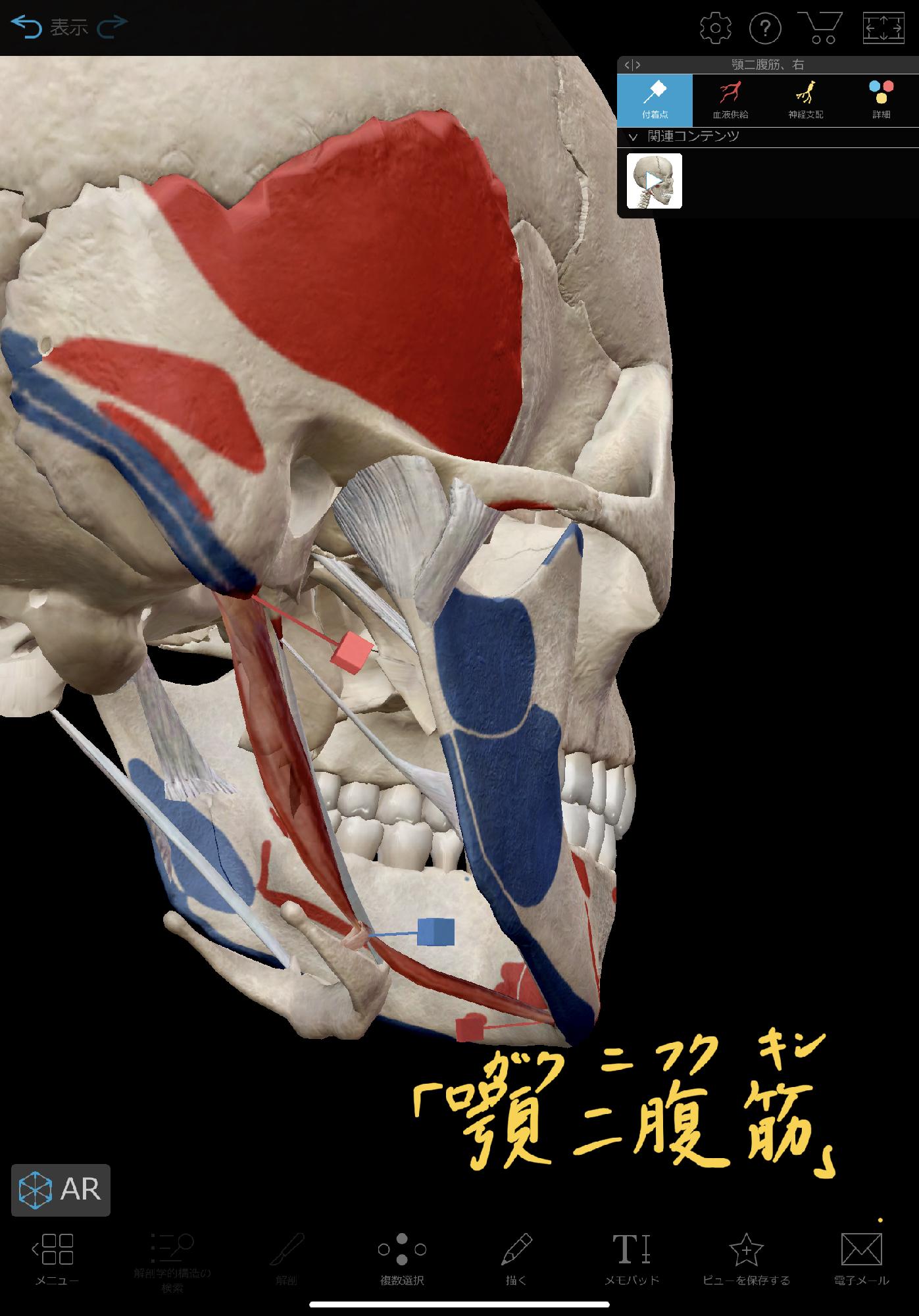 顎の痛みや噛み合わせを整える「顎二腹筋リリース」 :理学療法士 安部 ...