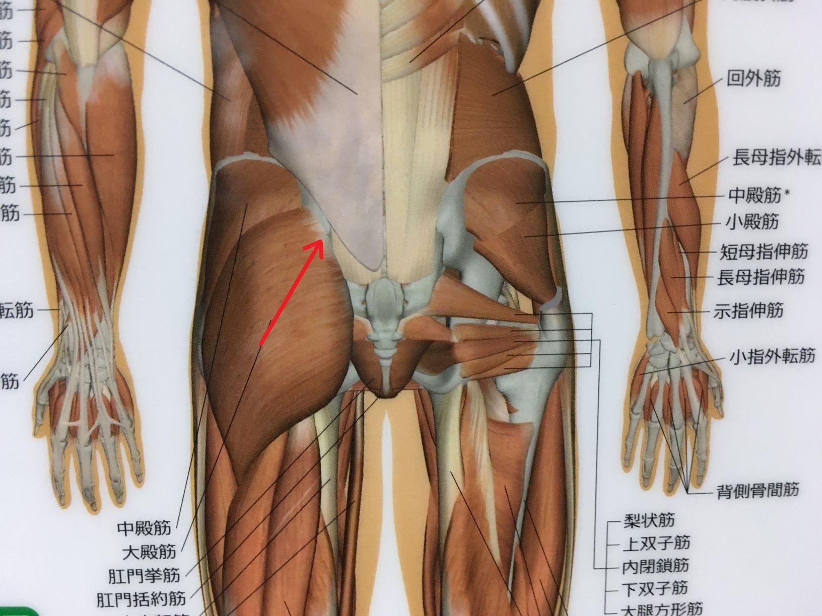 尻 の 痛 お 筋肉